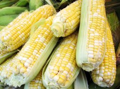 farmers mkt corn